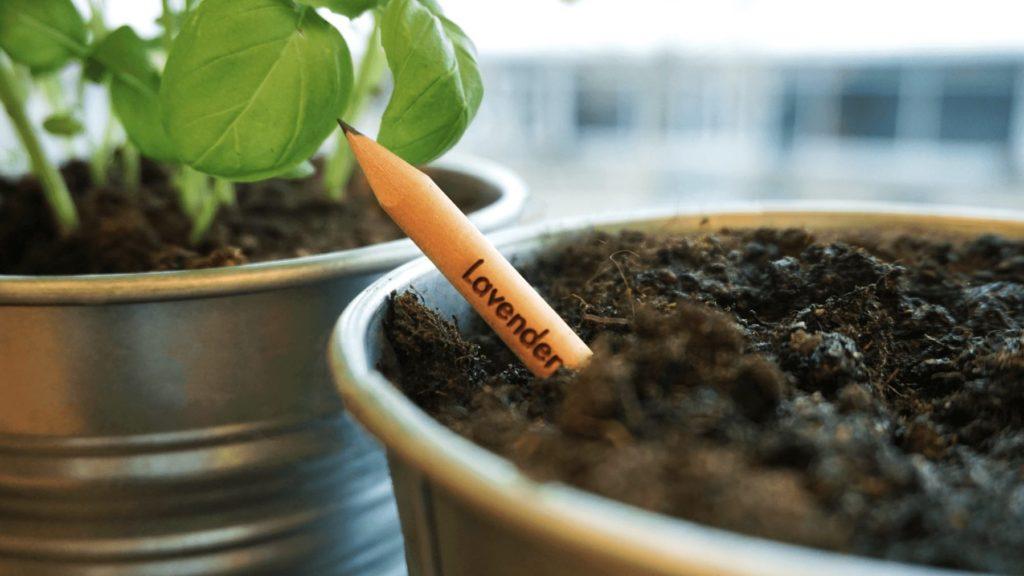 olowek z nasionami, ołówek z nasionami, sprout, ooototototo